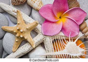 Seashells in High Key - Assorted seashell background shot in...