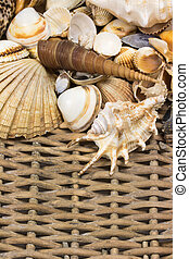 Seashells  in the upper side of old wicker baket. Vertically.