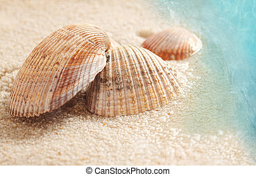 Seashells in the wet sand - Small seashells in the wet sand