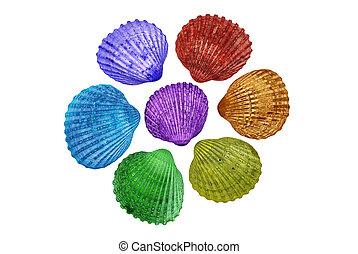 Seashells in unnatural, bright colours