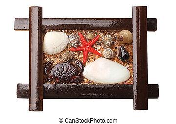 Seashells in wooden frame