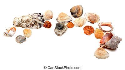 seashells, kopie, verzameling, ruimte