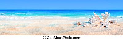 seashells, litoral