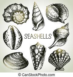 seashells, mano, disegnato, set., schizzo, disegni elementi