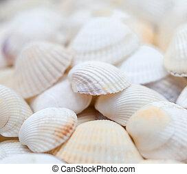White seashells. Mollusk shells. Seashell background. Texture of the light shells.