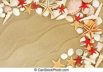 Seashells on a Sandy Beach