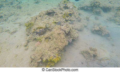 Seashells on bottom of Red sea