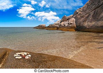 Seashells on exotic beach