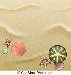 Seashells on sand, background