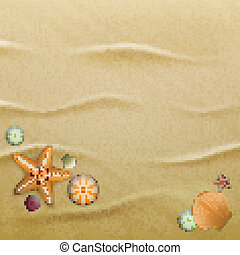 Seashells on sand, background - Sea urchin shells, starfish ...