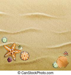 Seashells on sand, background - Sea urchin shells, starfish...