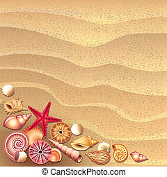 seashells on sand background vector