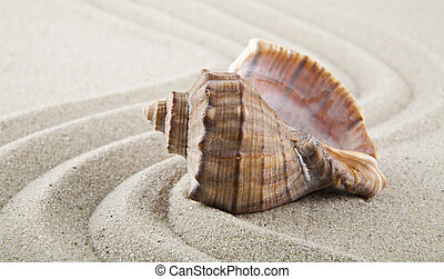 Seashells on sand for relaxation as background