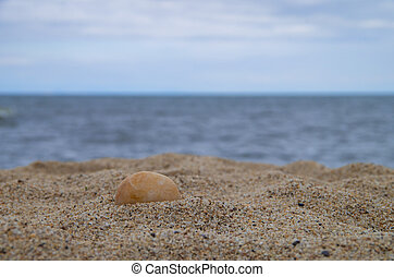Seashells on Sand on the Beach