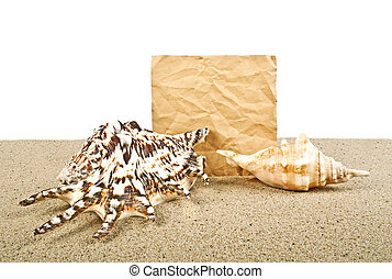 Seashells on sand with paper for text on a white background
