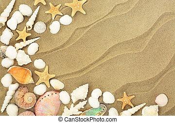 Seashells on Sandy Beach