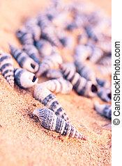 seashells on the beach