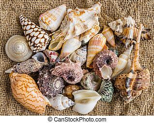 seashells on the sand of a beach.