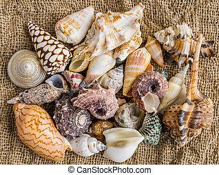 seashells on the sand of a beach.