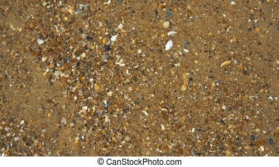 Seashells on the shore. Water waves cover seashells on the sand.the waves splash on the shells.
