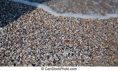 Seashells on the shore. Water waves cover seashells on the...