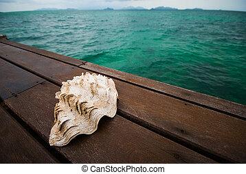 Seashells on the wooden bridge