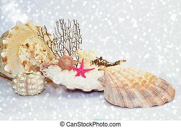 Seashells on white sparkling sandy beach