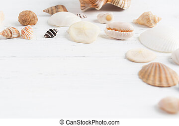 Seashells on white wooden background with copy space