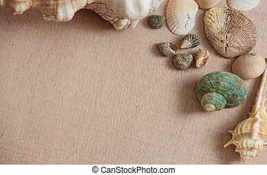 Seashells on wooden background with copyspace