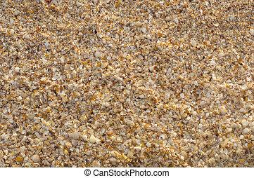 seashells, plage