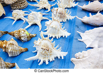 Seashells on a blue background put up for sale on the stand in Kolobrzeg in Poland