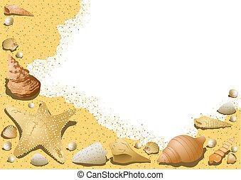 seashells, sablonneux, fond