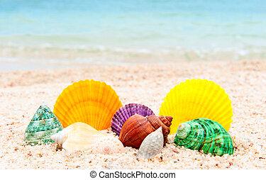 seashells, satz, sandstrand, meer