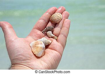 seashells, segurando mão