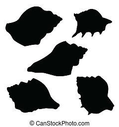 seashells, silhouettes