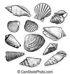 Seashells sketch set