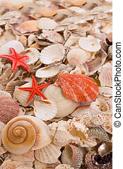 Seashells - Backgrounds from defferent sorts of sea shells