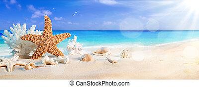seashells, su, spiaggia