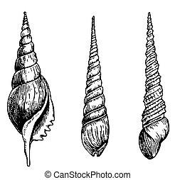 Three different seashells on white background