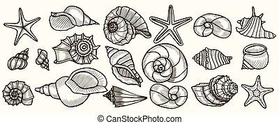 Seashells vector set. Hand drawn illustrations of engraved...