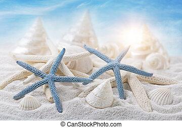 seashells, witte