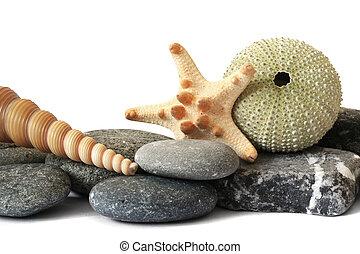 Seashore Still Life