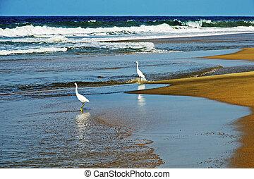 Seashore surf with egrets