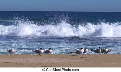 A full shot of a seashore and waves with gulls