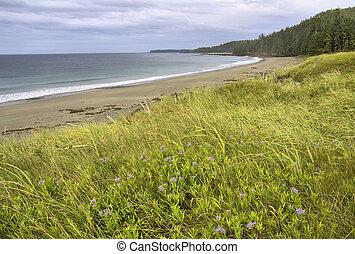 Seaside scenic view