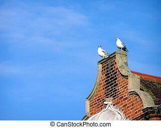 Seaside Sentinels