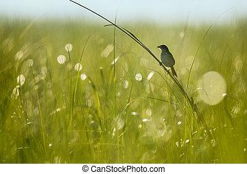 Seaside Sparrow Silhouette