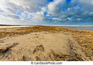 Seaside with sand dunes