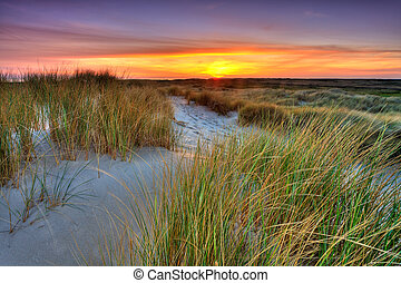 Seaside with sand dunes at sunset