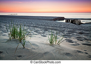 Seaside with tuft of grass, sand dunes and colorful sky at sunset.